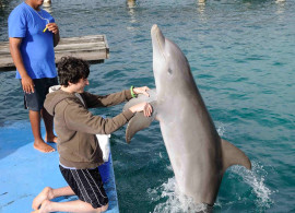 Student with dolphin