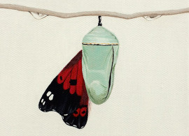 drawing of butterfly leaving cocoon