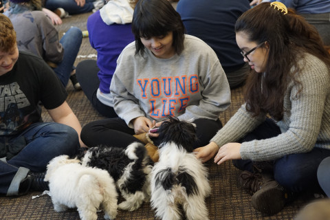 Puppy Therapy! Courtesy of Psychology Club, Hillel, and the Office of Community Engagement