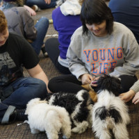 Students playing with puppies