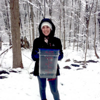 Camille Rossiello (environmental studies and math/computer science) taps a tree to make syrup
