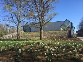 Rear view of the Dance Building with daffodils in bloom.