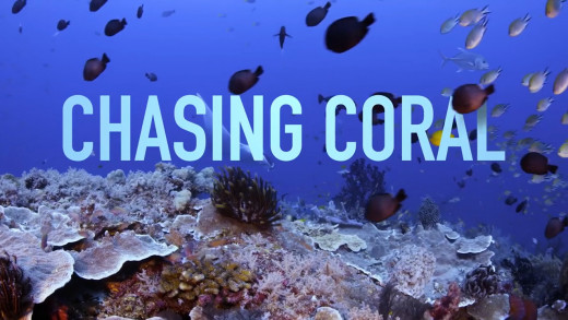 Chasing Coral documentary still