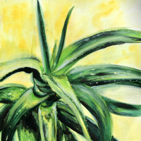 Green aloe plant on yellow background.