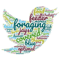 Word cloud for this group's project looking at blue jay foraging preferences
